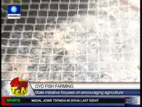 oyo Fish Farming:The challenge of a profit-oriented scheme
