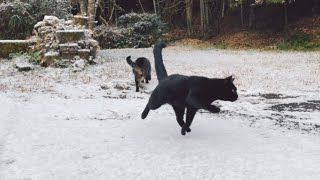 雪、冷たすぎニャ😹 Cats and dog play in the snow