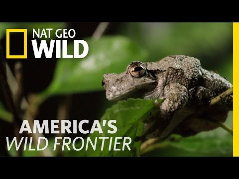 Defrosted Frogs Come Alive | America
