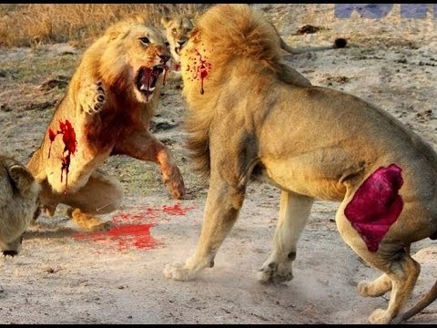 Download 10 CRAZIEST Animal Fights Caught On Camera pt 2