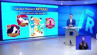 22 Warga Gorontalo Terjangkit Penyakit Antraks.