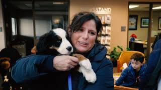 A Surprise for Tracey: A Bernese Mountain Dog Story
