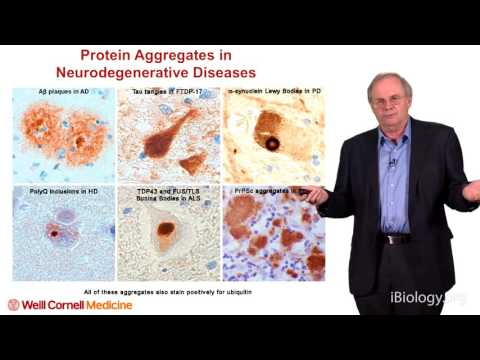 Neurodegenerative-related proteins (transglutaminase substrates) Gregory Petsko