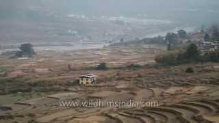 Terrace farming in Wangdue Phodrang, Bhutan