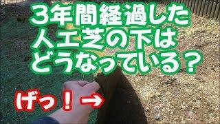 3年前に敷いた人工芝をめくってみました 地面はどんなことになっているのか アリの巣 ハネアリ 白アリ ダンゴムシ ムカデ thumbnail