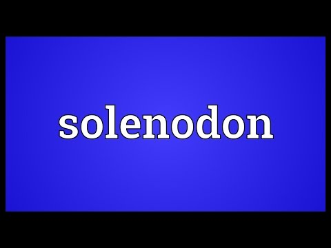 Solenodon Meaning