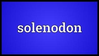 Solenodon Meaning