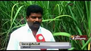 Big story about Hardships faced by Sugarcane farmers in Tamilnadu - Part 1