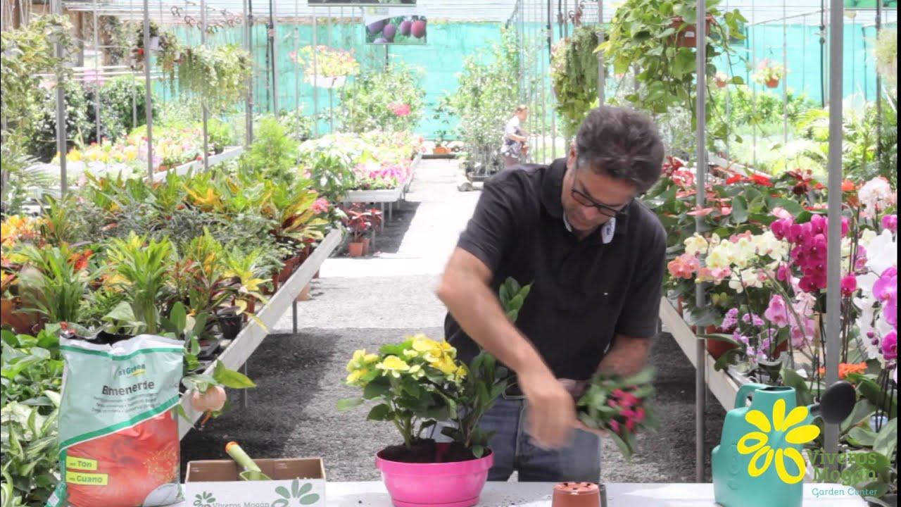 C mo realizar una composici n de plantas de interior en for Varias plantas en una maceta