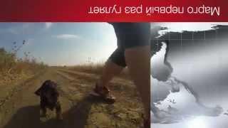 Собака  Щенок Таксы по имени Марго Первый Раз Гуляет