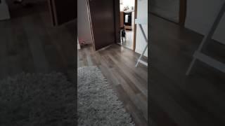 Katze macht Ninjarolle