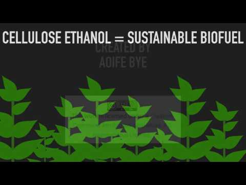 Creating A Sustainable Biofuel