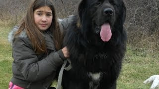 Most Expensive Breeds Of Guard Dog In The World 2014
