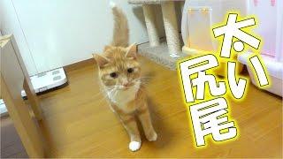 猫が何かにビビって尻尾を太くしていた - the cat is afraid of something -