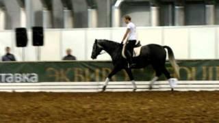 Виктор Угрюмов и молодая лошадь KWPN на эквиросе 2011