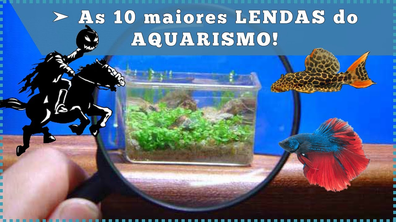 As 10 maiores LENDAS do AQUARISMO!