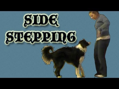 Side Stepping - Clicker Dog Training