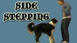 Side Stepping - Clicker Dog Training
