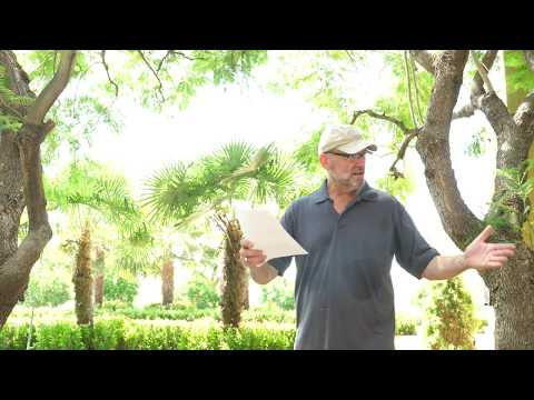 Moroccan Garden Of Eden, by Brad Fickes | Citrus Tree Care Lesson (Part 3 of 4)