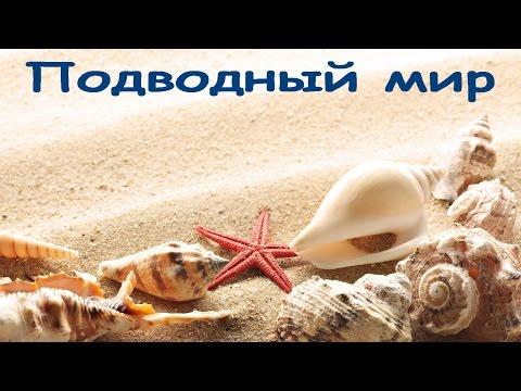 Фото рыбы черепахи медузы кораллы, глубины подводного мира [HD]