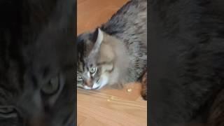 КОТ ест оливки