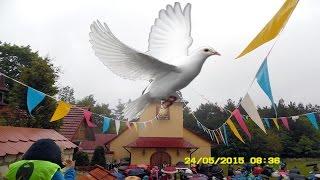 Pieśni do Ducha Świętego  17.11.2012   -   17.11.2015