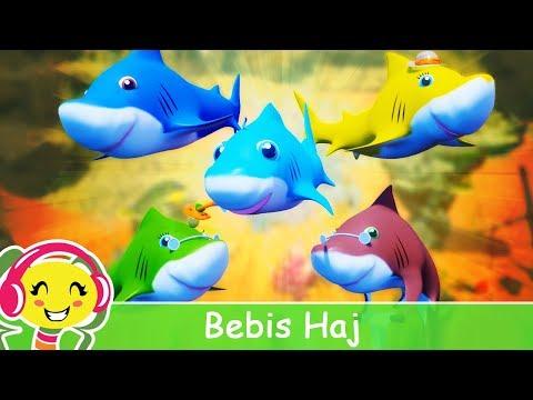 Cantec nou: Bebis Haj - Barnsnger p Svenska | BarnMusikTV