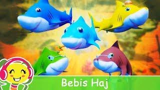 Bebis Haj - Barnsånger på Svenska | BarnMusikTV