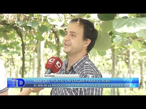 Mar del Plata, un lugar para el kiwi