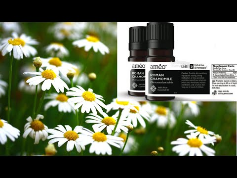 roman-chamomile-essential-oil-benefits-and-uses!