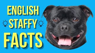 Staffordshire Bull Terrier Top 10 Facts (English Staffy)