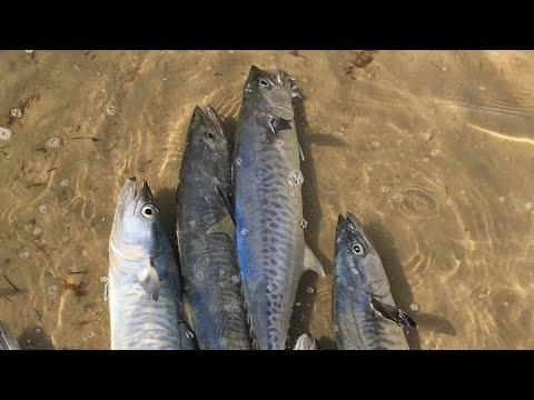 Kingfish (King Mackarel) Fishing in Qatar - Shore Jigging