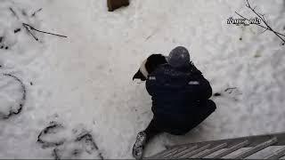 В Уфе спасатели вызволили собаку в промзоне