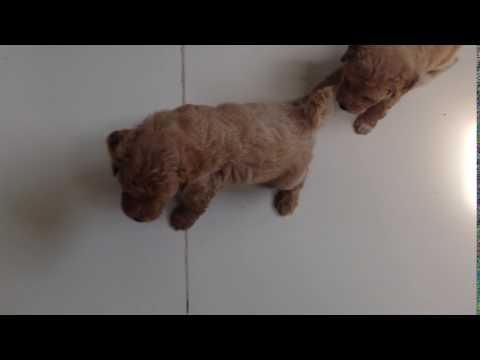 Jak oduczyć psa sikania w domu: trening czystości i najczęstsze błędy