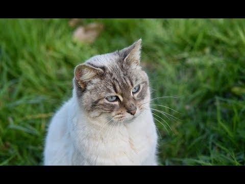 Каждый вечер соседский кот выслушивал девушку. Но, однажды, он решил утешить ее