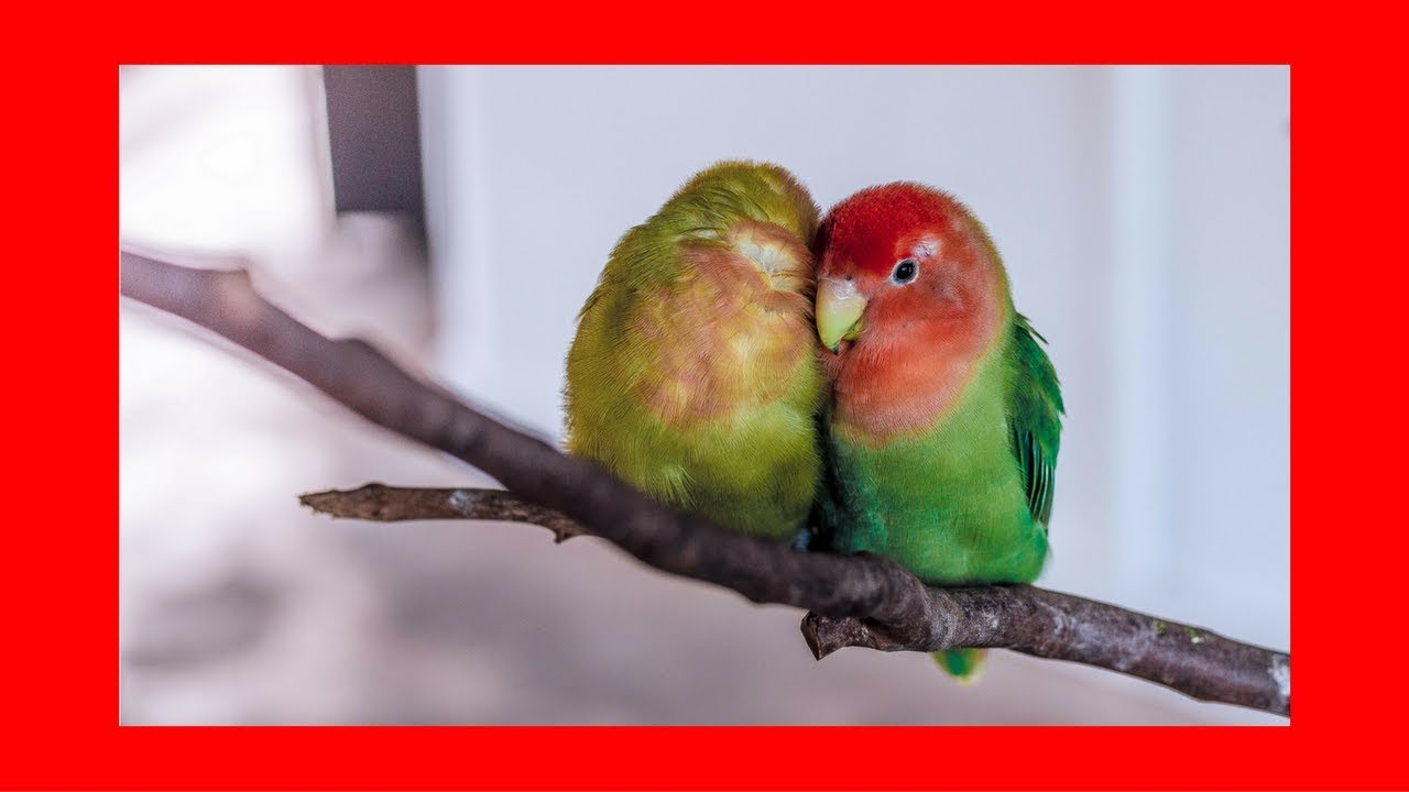 Parrot lovers dating