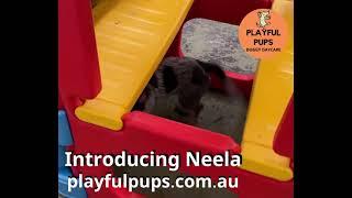 Introducing Neela!
