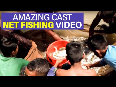 lot of fish in the sea dating
