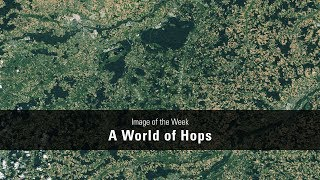 A World of Hops