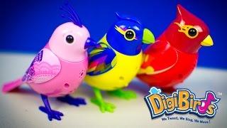 DigiBirds Singing Bird Toys | Kinder Playtime Toy Spotlight