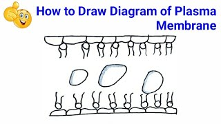 How To Draw Structure Of Plasma Membrane
