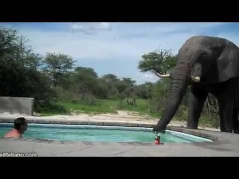 Video de risa piscina en la selva youtube for Piscina la selva