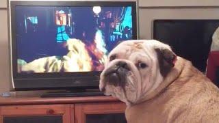 bulldog warns girl on tv during horror movie