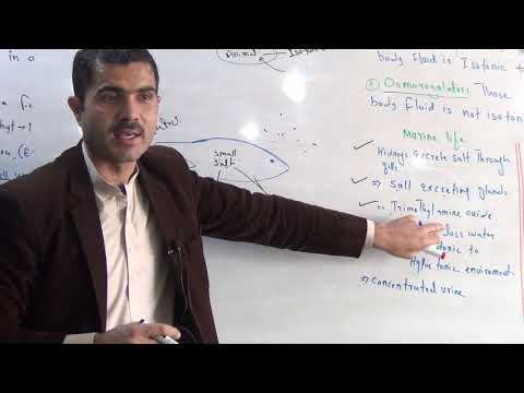 Osmoregulation In Animals, Marine And Fresh Water Osmoregulation, Urdu Hindhi By Dr Hadi