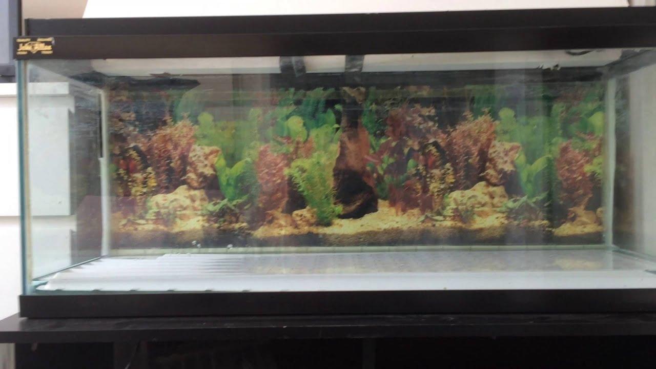 3ft Aquarium For Sale 1000 Aquarium Ideas