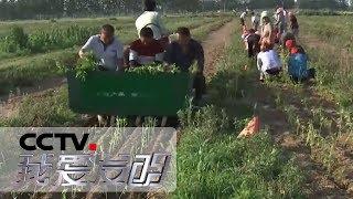 《我爱发明》 20190721 快乐农田1| CCTV科教