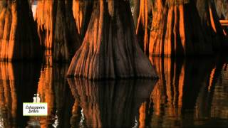 Louisiane : Le sud des Etats Unis - Échappées belles