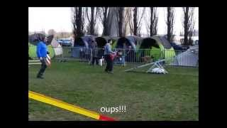 1er Concours Agility - Dickens Border Terrier
