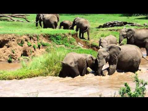 Una elefanta mayor ayuda a una cría a cruzar un río