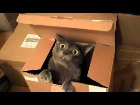 Korat in a box